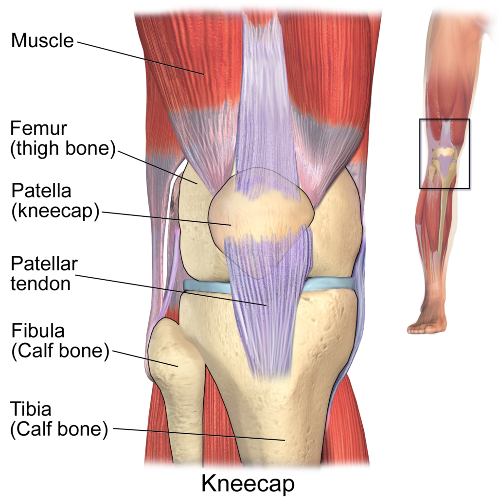 Patellar Tendinitis A Condition Of Many Names